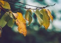 Fall Season Can Lead To Wet Basement Problems