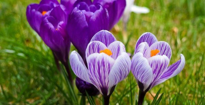 Has spring sprung?